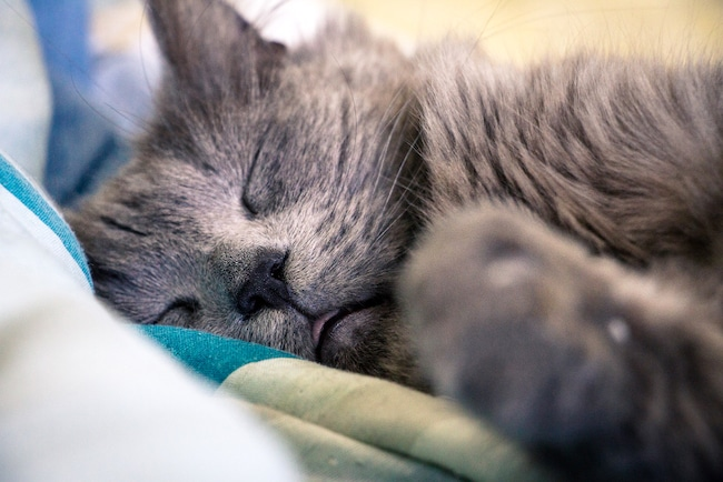 Les Chats : combien de temps ont-ils besoin de dormir ?