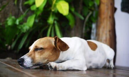 combien dort chien
