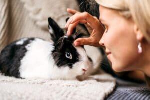 mutuelle pour lapin