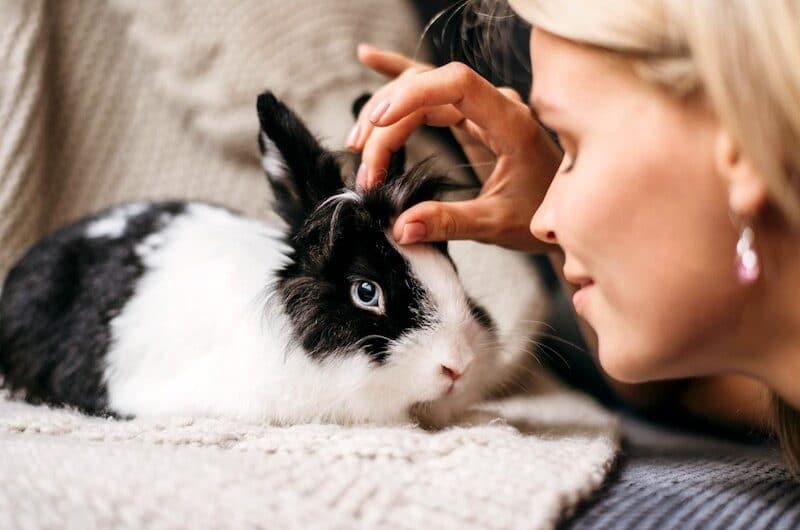 Mutuelle Lapin : Quelle est son utilité pour votre animal ?
